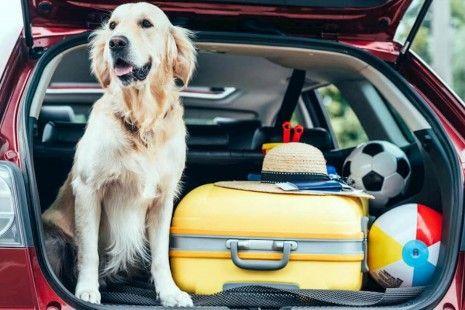 Tudo o que tens de saber antes de transportares o teu animal de estimação no carro