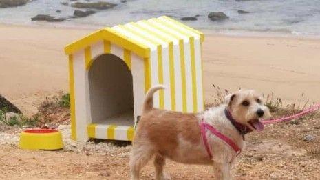 Já abriu a nova praia para animais — e tem barraquinhas para os cães
