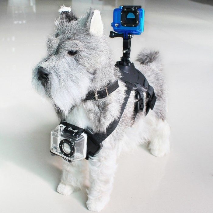 Pet Harness with Support for Sports Camera KSIX Black